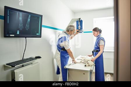 L'examen vétérinaire dans la pratique vétérinaire chien, X-ray, Autriche Banque D'Images
