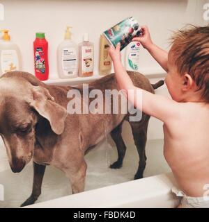 Baby Boy lave son chien Banque D'Images