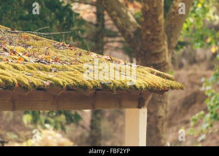 De plus en plus de mousse sur toit Gazebo Banque D'Images