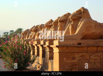 L'égypte des statues de sphinx dans le temple de Karnak Banque D'Images