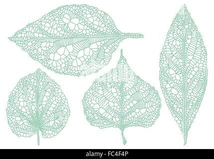 Veine verte feuilles, illustration dessinée à la main, vector set Banque D'Images