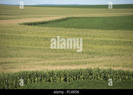 Plantation de soja et de maïs dans la campagne - rotation des cultures Banque D'Images