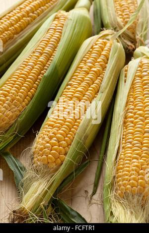 Matières premières fraîches des épis de maïs jaune Banque D'Images