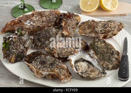 Matières premières fraîches sur une assiette d'huîtres du Pacifique Banque D'Images