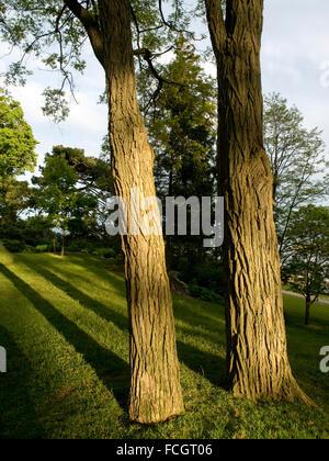 Deux troncs d'arbre au coucher du soleil avec de longues ombres sur l'herbe verte dans un parc au centre-ville de Banque D'Images