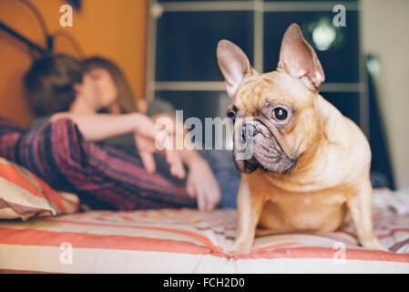Bouledogue français assis sur le lit à la maison tout en couple à l'arrière-plan Banque D'Images