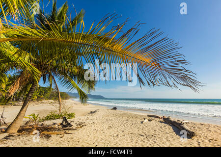 Palmiers sur cette belle plage de surf près de Grasse sur la Péninsule de Nicoya, Santa Teresa, Puntarenas, Costa Banque D'Images