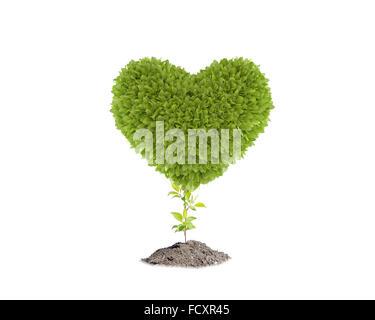 Image conceptuelle de plante verte en forme de coeur Banque D'Images