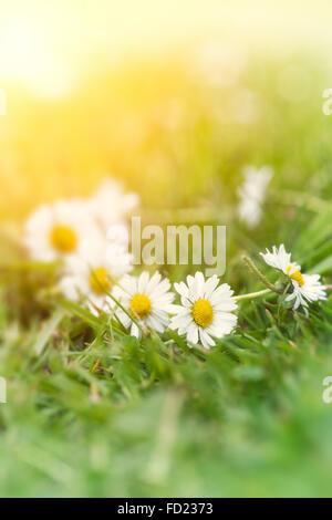 Connexion en série sur l'herbe d'été avec un filtre appliqué