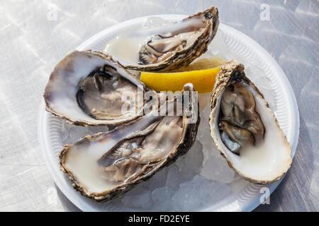 Une plaque d'ouvrir les huîtres servi de manière traditionnelle sur la glace avec une pointe de citron. Banque D'Images