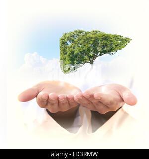 Image conceptuelle de l'arbre vert en forme de foie humain Banque D'Images