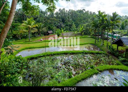 Hôtel complexe dans un bon hôtel de ville de Ubud, palmiers, surfaces de l'eau, Ubud, Bali, Indonésie, Asie