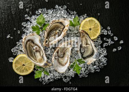 Les huîtres servi sur plaque en pierre avec la dérive Banque D'Images