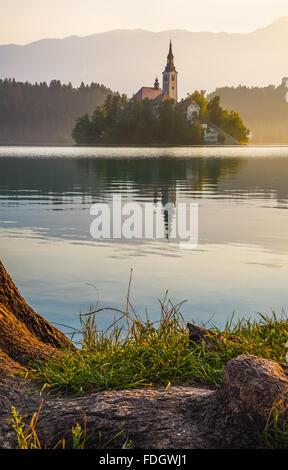 Petite île avec l'Église catholique dans le lac de Bled, en Slovénie, au lever du soleil avec racine d'arbre en Banque D'Images