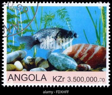 ANGOLA - circa 2000: timbre imprimé en Angola montre Goldfish Banque D'Images