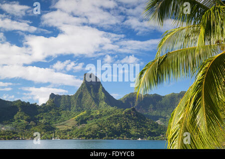 Baie de Cook, Mo'orea, îles de la société, Polynésie Française Banque D'Images
