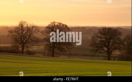 Aube dorée de la lumière sur la campagne et le domaine d'hiver semé de blé ou d'orge, près de Northampton dans le Banque D'Images