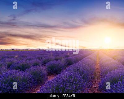 Coucher de soleil sur l'été un champ de lavande à Valensole.Provence,France Banque D'Images