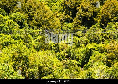 Vélo de montagne traversant le pont suspendu de Mangatukutuku sur le sentier du Bois dans le Parc Forestier de Pureora Banque D'Images