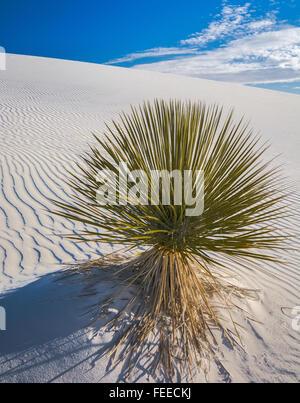 Green plante poussant dans le sable blanc Banque D'Images