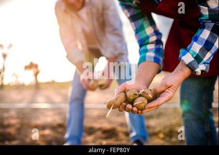 Close up de mains de la plantation de pommes de terre en couple