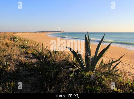 Plage de sable fin et phare de Cabo de Trafalgar, Province de Cadix, Espagne