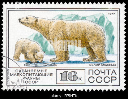 Urss - circa 1977: timbre imprimé en URSS montre Polar bear Banque D'Images