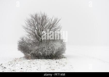 Les buissons couverts de neige le long d'un petit chemin sur une journée d'hiver dans les domaines quelque part Banque D'Images