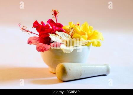 Meuleuse manuelle et de chaussures Hibiscus fleur couleur rouge , jaune , rose et blanc utilisé pour la médecine Banque D'Images