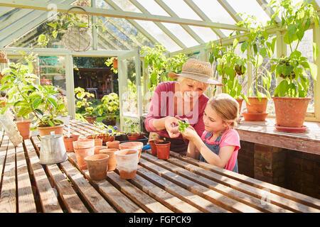 Grand-mère et petite-fille potting plants in greenhouse Banque D'Images