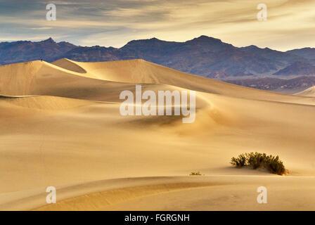 Télévision Mesquite sand dunes et plage de Amargosa dans distance au lever du soleil dans la Death Valley National Park, California, USA