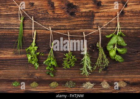 Herbes culinaires. Banque D'Images