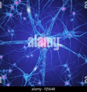 Réseau de neurones , les cellules du cerveau humain , les neurones du système nerveux central , Banque D'Images