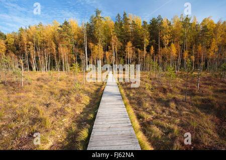 Wooden path chemin de sentier marsh marais de belle forêt. Automne nature paysages forestiers. Planche de bois l'embarquement Banque D'Images