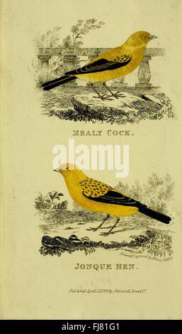 Un traité sur la pratique les oiseaux chanteurs