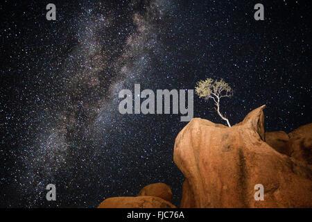 Un arbre dans la Voie Lactée Banque D'Images