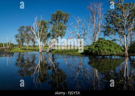 Réflexions matinales sur les eaux jaunes de Billabong dans les terres humides du parc national de Kakadu, territoire Banque D'Images