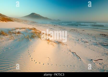 Brouillard de mer et des cormorans sur Platboom Beach, cap de Bonne-Espérance, Afrique du Sud Banque D'Images