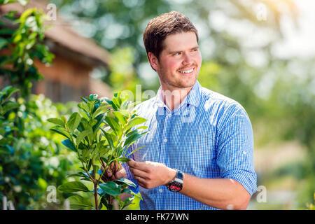 Beau jardinier petit arbre, vert nature ensoleillée Banque D'Images