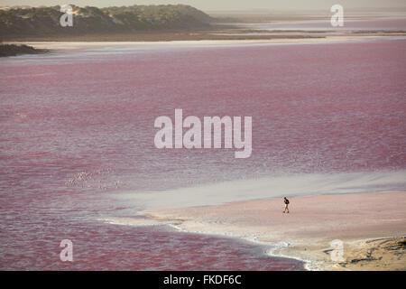 Wendy marcher courageusement sur les rives du Lagon à Hutt rose Port Gregory, l'ouest de l'Australie Banque D'Images