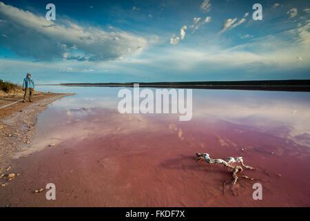 Wendy sur le rivage de la lagune rose à Port Gregory, l'ouest de l'Australie Banque D'Images