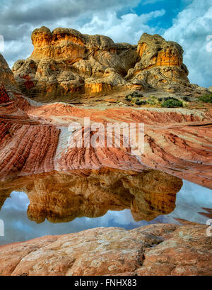 Pocket blanc avec l'eau de pluie piscines. Vermilion Cliffs National Monument, Arizona Banque D'Images