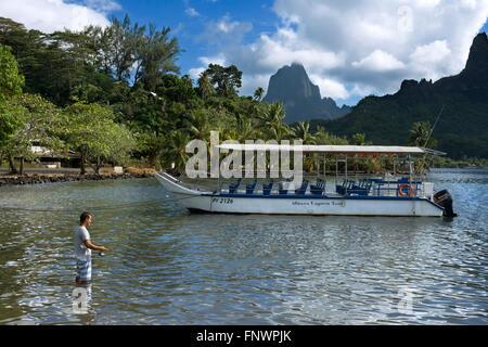 Fisher, à Moorea, Polynésie Française, îles de la société, Pacifique Sud. Baie de Cook. Banque D'Images