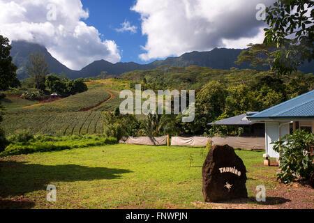 Une ferme d'ananas sur l'île de Moorea, avec des montagnes qui culminent dans la distance. Polynésie Française, Banque D'Images