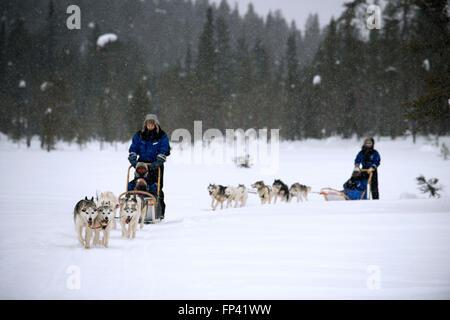 Salla husky safari. Laponie, Finlande. Avant le safari notre guide vous offre un cours de conduite et vous dire comment gérer la