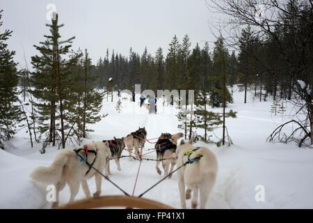 Salla husky safari. Laponie, Finlande. Avant le safari notre guide vous offre un cours de conduite et vous dire Banque D'Images