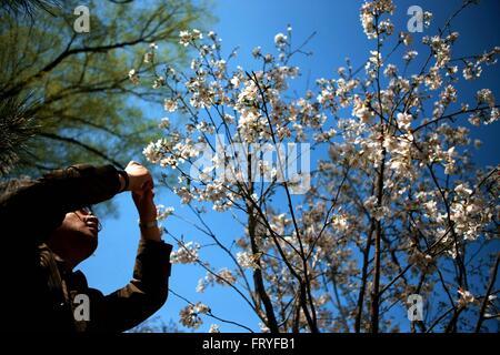 (160325) -- BEIJING, 25 mars 2016 (Xinhua) -- un homme utilise un téléphone cellulaire pour prendre des photos de Banque D'Images