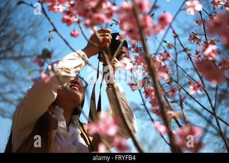 (160325) -- BEIJING, 25 mars 2016 (Xinhua) -- un touriste prend des photos du Parc Yuyuantan à Peach Blossoms à Banque D'Images