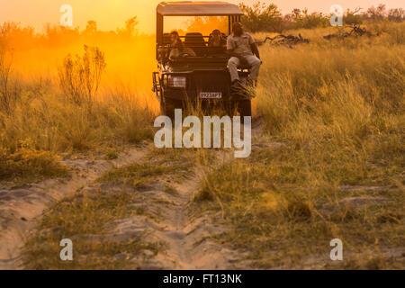 Jeep safari avec guide de la faune-spotter sur un jeu dur au coucher du soleil, Sandibe Camp, par le Moremi, Okavango Delta, Botswana, Afrique du Sud