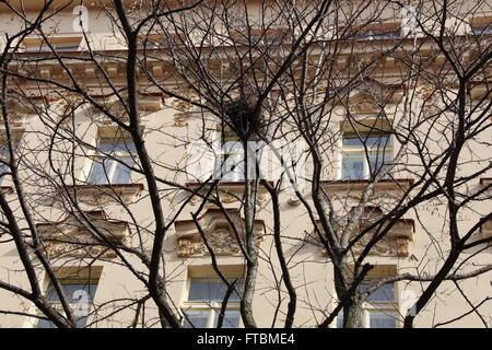 Un nid dans un arbre à Vinohrady, un quartier résidentiel de Prague, République Tchèque Banque D'Images